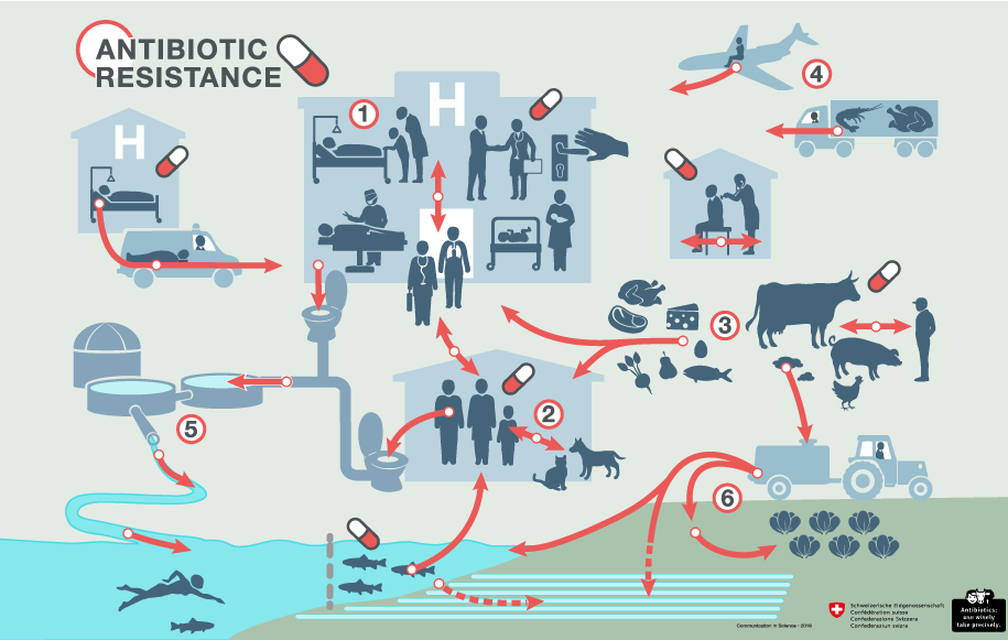 Antibiotic resistance affects humans, animals and the environment