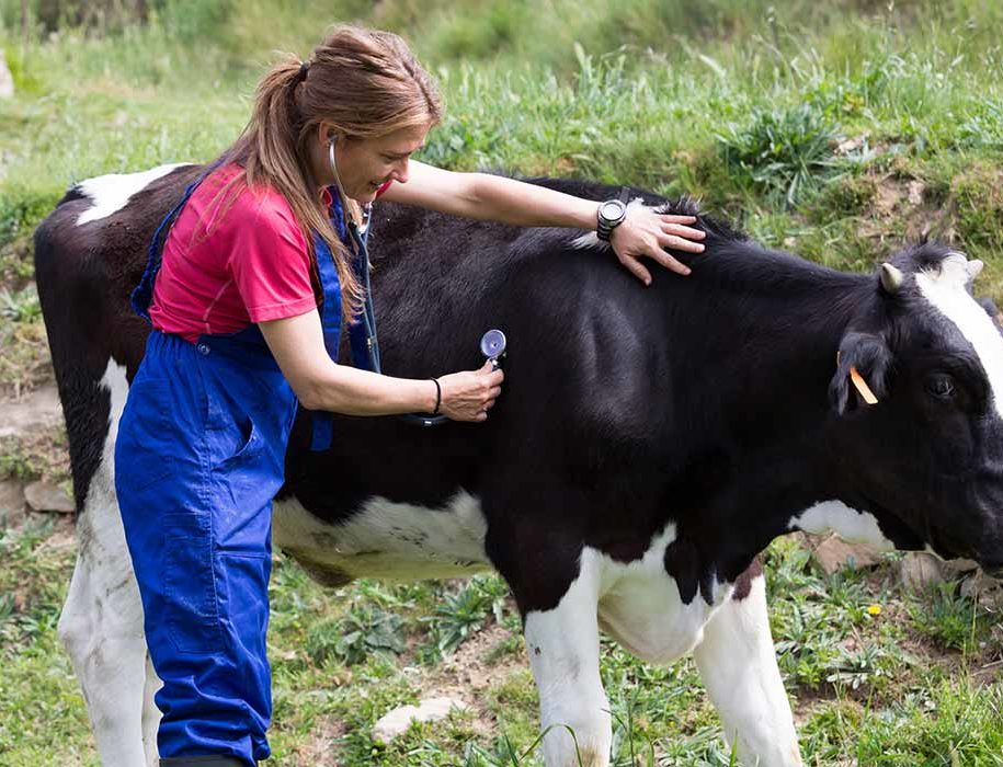 Healthier animals, less antibiotics